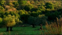 Royalty Free Stock Video Footage of a hillside meadow shot in Israel at 4k with Red.