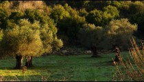 A mountain meadow shot in Israel at 4k with Red.