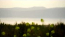 Stock Video Footage of yellow flowers on the Sea of Galilee shore shot in Israel at 4k with Red.