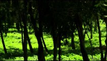 Royalty Free Stock Video Footage panorama of a forest shot in Israel at 4k with Red.