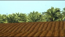 Royalty Free Stock Video Footage panorama of furrows and palm trees shot in Israel at 4k with Red.