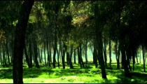 Royalty Free Stock Video Footage of a silhouetted forest shot in Israel at 4k with Red.