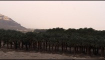 Stock Video Footage panorama of a palm grove at the Dead Sea shot in Israel at 4k with Red.