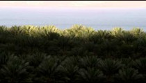Royalty Free Stock Video Footage of palm tree crowns at the Dead Sea shot in Israel at 4k with Red.
