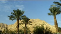 Stock Video Footage of Ein Gedi palm trees and a mountain shot in Israel at 4k with Red.