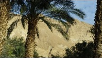 Royalty Free Stock Video Footage of Ein Gedi palm trees shot in Israel at 4k with Red.