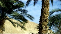 Royalty Free Stock Video Footage panorama of Ein Gedi palm trees shot in Israel at 4k with Red.