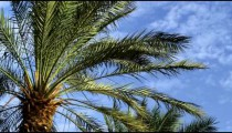 Royalty Free Stock Video Footage of palm fronds and blue sky shot in Israel at 4k with Red.