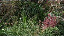 Royalty Free Stock Video Footage of vegetation at Ein Gedi shot in Israel at 4k with Red.