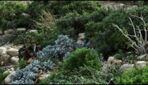 Royalty Free Stock Video Footage of vegetation amid rocks at Ein Gedi shot in Israel at 4k with Red.