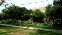 Royalty Free Stock Video Footage of an oasis kibbutz shot in Israel at 4k with Red.