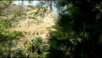 Royalty Free Stock Video Footage of greenery in the desert shot in Israel at 4k with Red.