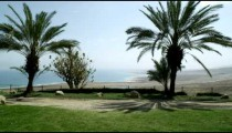 Royalty Free Stock Video Footage of palm trees and the Dead Sea shot in Israel at 4k with Red.