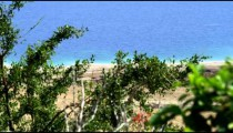 Royalty Free Stock Video Footage of greenery at the Dead Sea shot in Israel at 4k with Red.