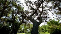 Stock Footage of sunshine through forest branches in Israel.