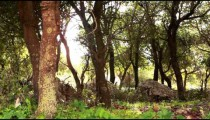 Stock Footage of a rocky grove of trees in the Carmel region of Israel.