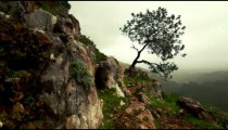 Stock Footage of a lone tree on a rocky mountainside in Israel.
