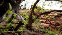 Stock Footage of a gnarled, wet tree trunk in Israel.