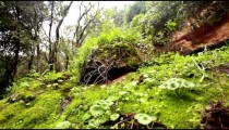 Stock Footage of lush, green forest floor in Israel.