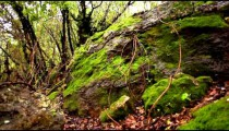 Stock Footage of mossy rocks in a forest in Israel.