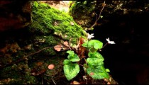 Stock Footage of moss and flowers on the banks of a river in Israel.