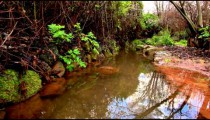 Stock Footage of a calm stream and its wet banks in Israel.