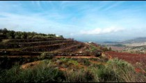 Stock Footage of a hillside orchard in the Golan Heights in Israel.