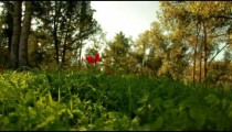 Stock Footage of a forest floor of flowers and grass in Israel.