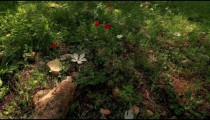 Stock Footage of white flowers on a forest floor in Israel.