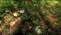 Stock Footage of flowers on a forest floor in Israel.