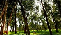 Stock Footage of a sunlit forest in Israel.