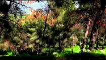 Stock Footage drive-by of forest trees in Israel.