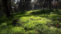 Stock Footage of a green forest floor in Israel.