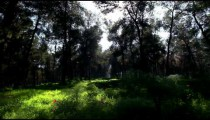 Stock Footage of a bright and shadowy forest in Israel.