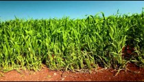 Stock Footage of a lush green field in Israel.