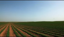 Stock Footage of a field of green crops in Israel.