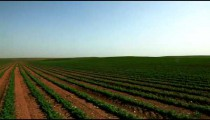 Stock Footage panorama of a field of green crops in Israel.