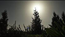 Stock Footage of silhouetted trees and cacti in Israel.