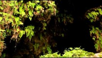 Stock Footage of water dripping through ferns in Israel.