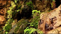 Stock Footage of water dripping down mossy rocks in Israel.