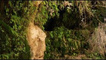 Stock Footage of moss and fern-covered rocks around a cave in Israel.