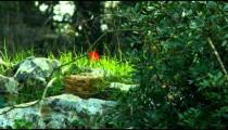 Panning shot of Carmel mountain forest floor shot in Israel.
