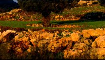 Panning shot of A pastoral hillside in the Golan Heights shot in Israel.
