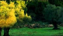 Panning shot of A hillside meadow shot in Israel.