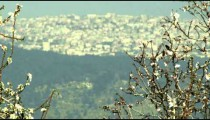 Panning shot of A city seen through almond branches shot in Israel.