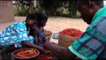 Royalty Free Stock Footage of An African family sorting chili peppers.