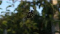 Big spider in Dandong China.