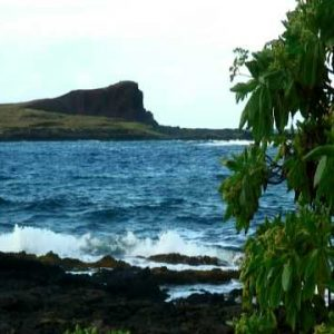 Shot of the Hawaiian shoreline with volcanic rock and a tree in the foreground.