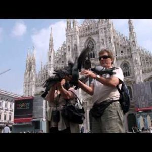 Royalty Free Stock Footage of People holding pigeons outside a Milan Italy mall.