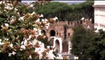White flowers in the foreground of Rome Italy.